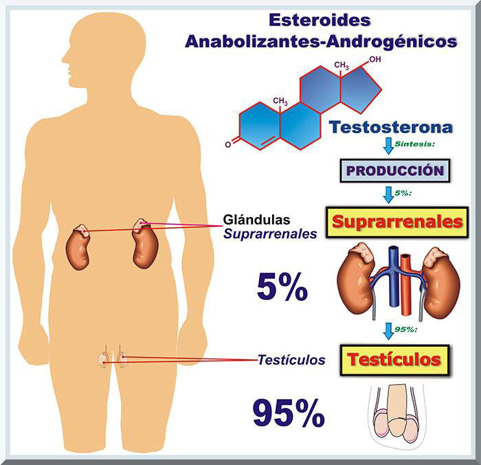 efectos de los esteroides pdf