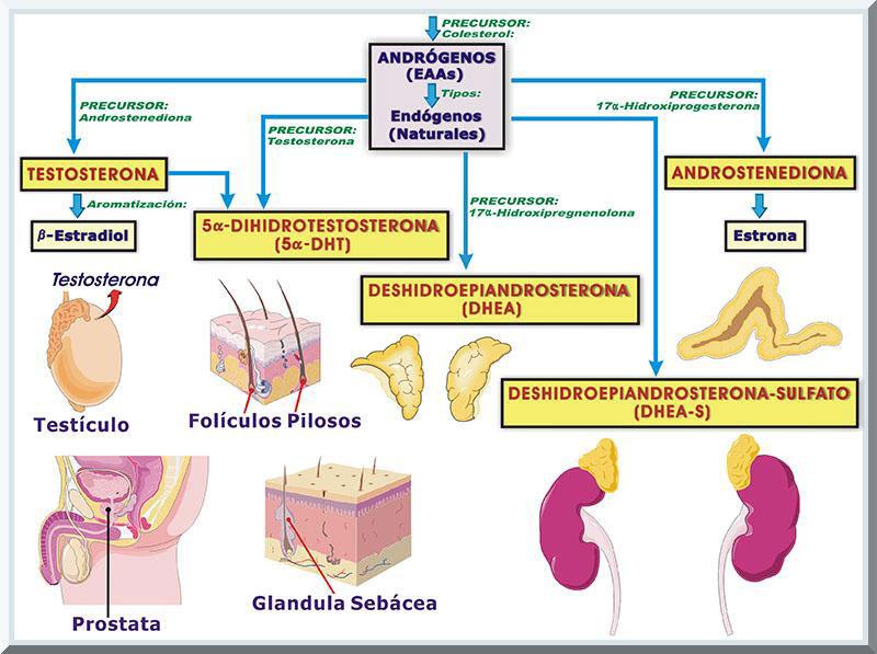 esteroides para crear masa muscular